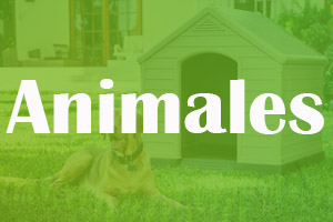 Animales_Jar